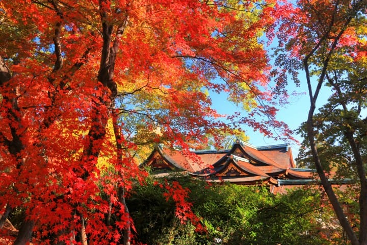 Image result for kyoto fall 2018
