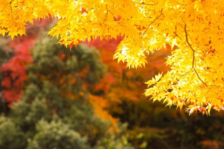 What to do in japan october