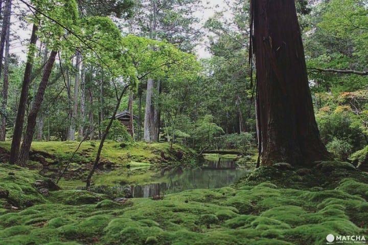 世界文化遺產京都西芳寺