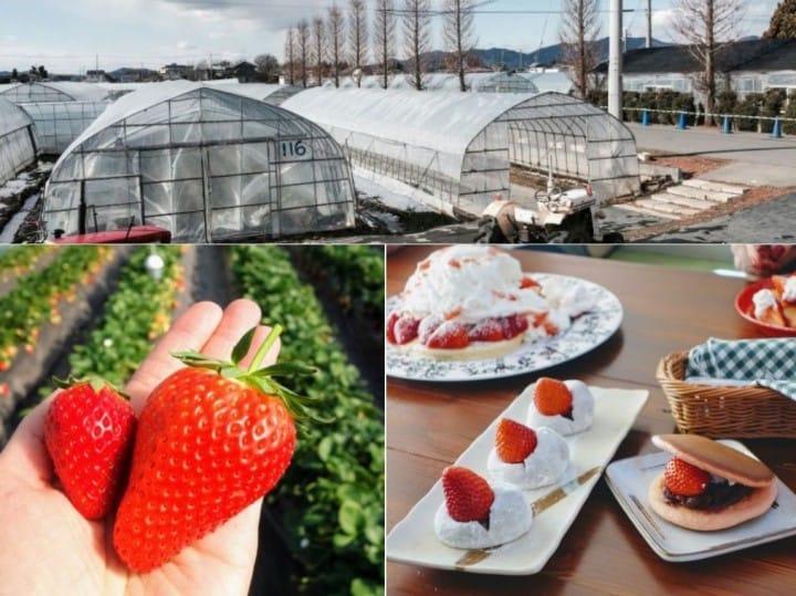搭東武鐵道直達草莓王國「栃木縣」,特色景點讓初訪的你也能玩得很道地!