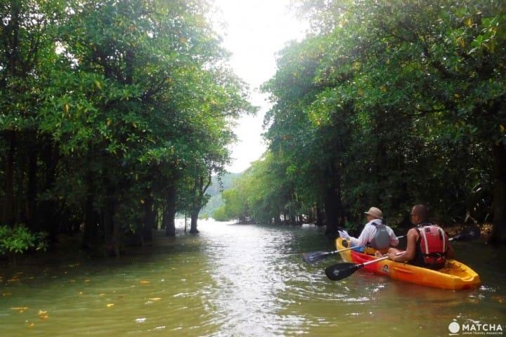 『冲绳』日本雅马逊西表岛!红树林,浮潜,水牛车体验自然系旅行