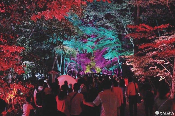 『京都』來下鴨神社糺之森光之祭 ,感受Team Lab展現光的魔幻與魅力