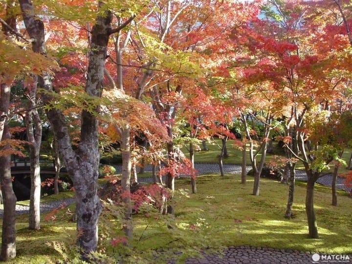 Yuk, Menikmati Perjalanan Musim Gugur di Hakone dalam 1 Hari!