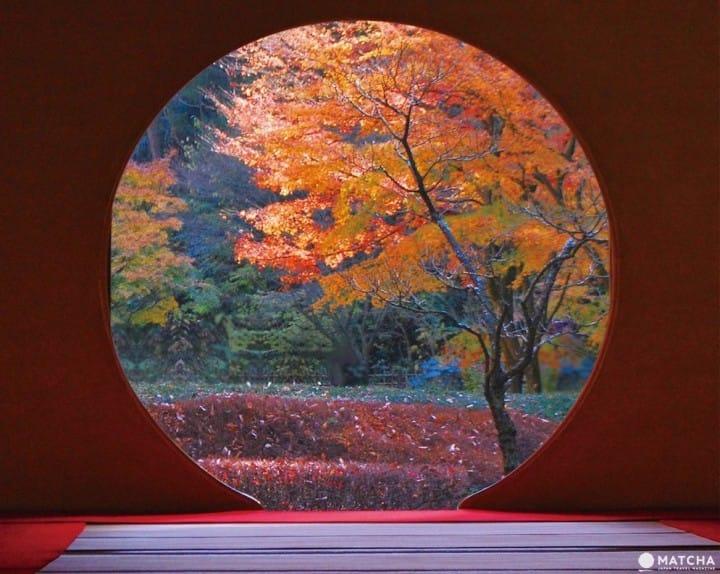 Los 4 Mejores Lugares para Observar las Hojas de Otoño de Kamakura en 2018: Templos, Parques y Mucho Más