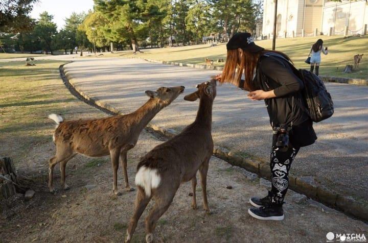 Venados de Nara