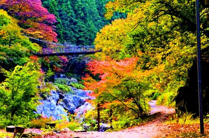 東京近郊 賞楓 秘境