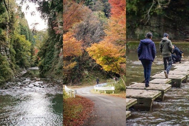 【千葉】紅葉鐵道之旅!東京近郊紅葉景點-養老溪谷筒森楓葉谷