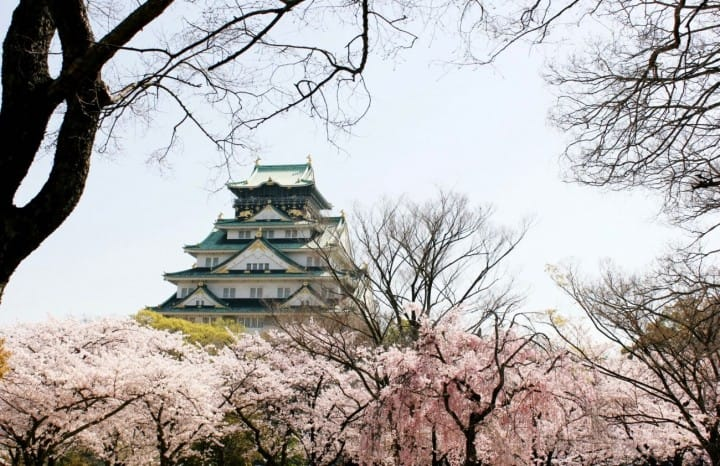 Top 10 địa điểm ngắm Sakura - hoa Anh đào nhất định phải đi ở Osaka (Bản 2019)