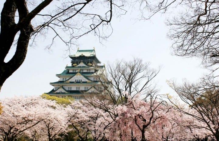 Inilah 10 Tempat Terbaik untuk Melihat Bunga Sakura di Osaka!