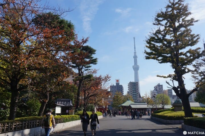 Wisata Ala Backpacker 7 Hari di Area Tokyo