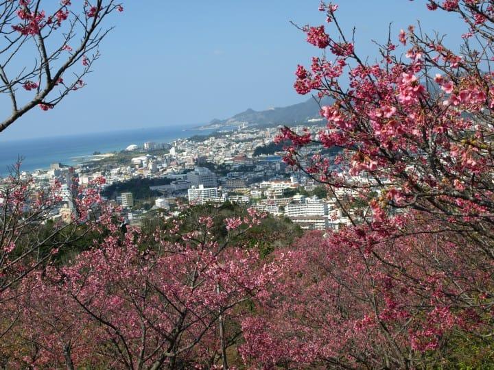 Cùng ngắm hoa anh đào nở sớm nhất tại Nhật! 5 lễ hội hoa anh đào ở Okinawa (năm 2019)