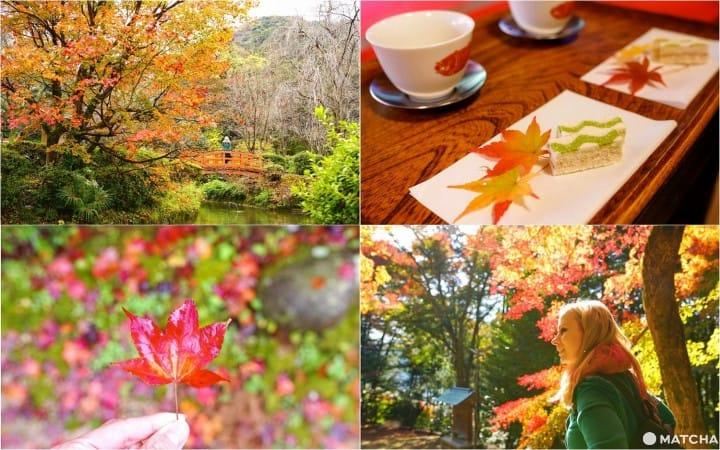 在多彩的大自然中畅游!强烈推荐鸟取县6处赏枫名景