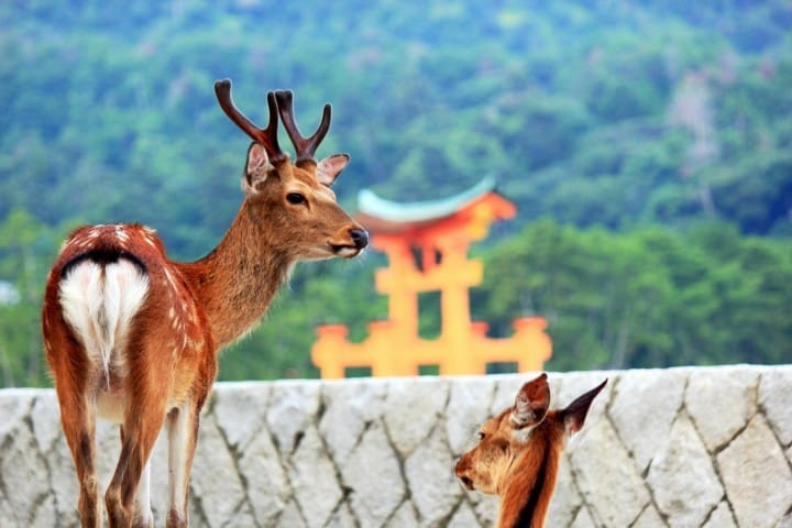 Meet Cats, Deer, And Other Animals At 5 Sightseeing Spots In Japan