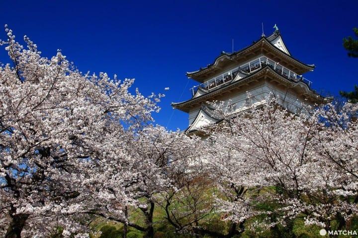与富士山、温泉、城堡共赏!关东近郊赏花景点7选(2019年版)