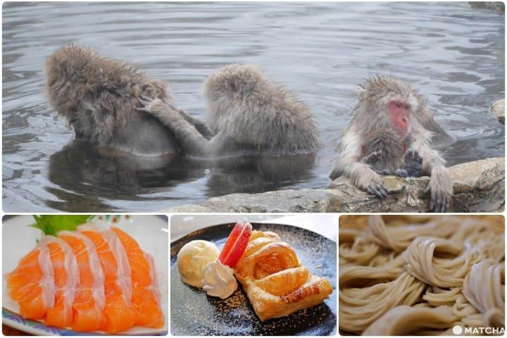【長野】來「地獄谷野猴公苑」看猴子爽爽泡湯不忘犒賞自己的完美行程