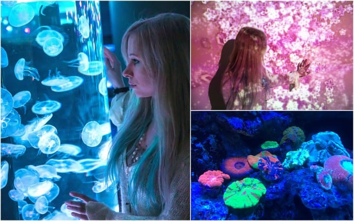 Maxell Aqua Park Shinagawa - Aquarium And Interactive Art Space