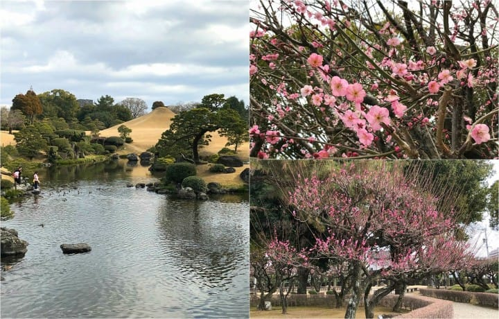 Japan, Off The Beaten Path (2) - In Search Of Plum Blossoms, North And South