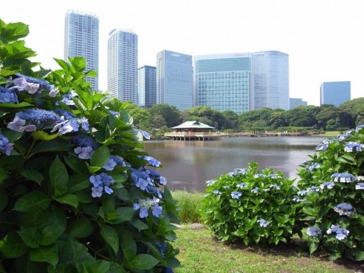 Tokyo Best 5 Hydrangea Spots - The Joy Of The Rainy Season