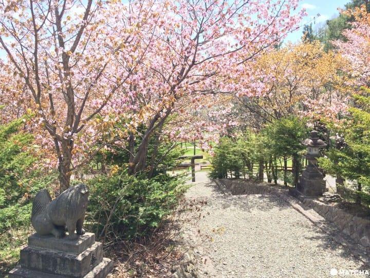 【北海道】就想独占整片樱花林!富良野樱花秘境五选