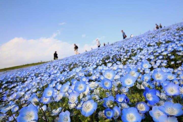 Giới thiệu các địa điểm ngắm hoa và cách đi đến