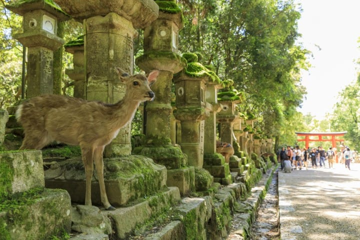 Nara Travel Guide – 17 Things To Do, Access, Where To Stay, And More