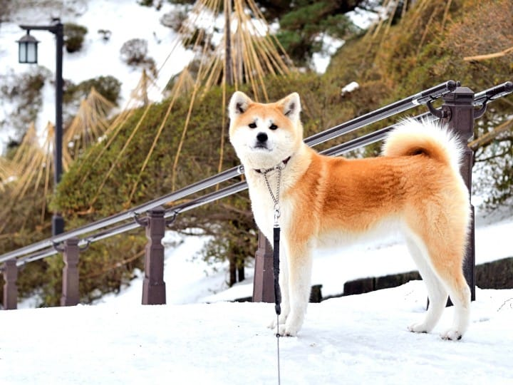 Akita Guide - 13 Destinations, Regional Food, And Travel Tips
