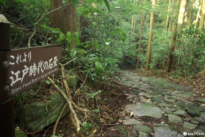 【箱根】讓江戶時代旅人嚇得皮皮挫的石板路「箱根舊街道」