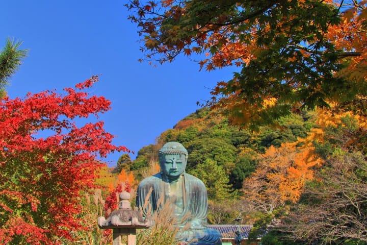 Giant Buddha Kotokuin