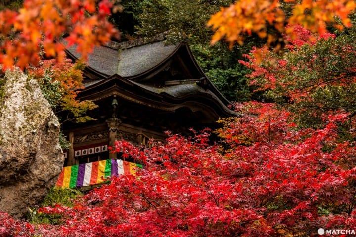 """【石川县】创建超过1300年!入选米其林旅游指南的红叶美景""""那谷寺"""""""