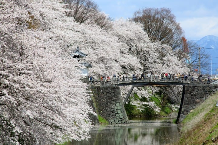 5 Stunning Cherry Blossom Spots In Yamagata: Castles, Festivals, And More!
