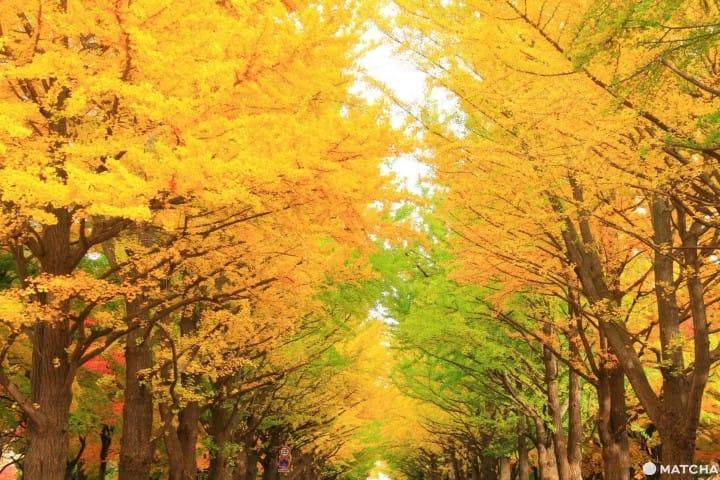 【2019年版】北海道绝美红叶10景点,美到不想离开!