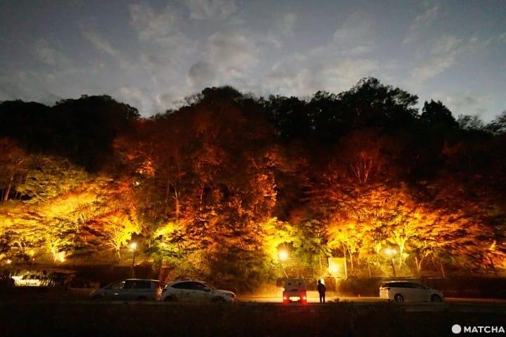 養老渓谷の筒森もみじ谷——ローカル線で行く美しい紅葉の旅