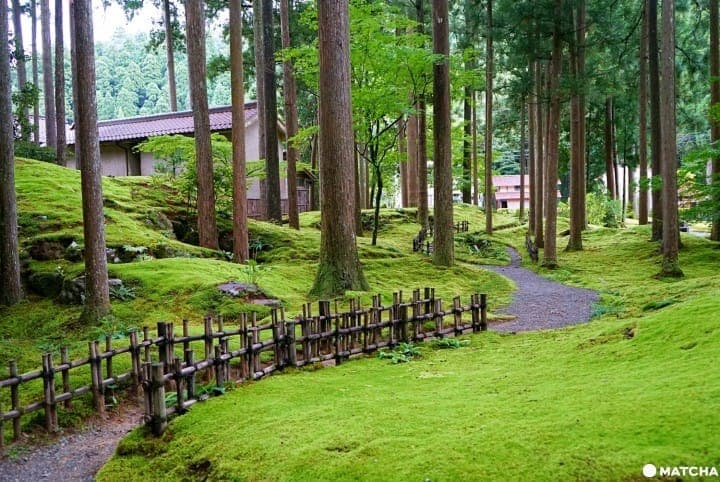 Japan's Moss Village, Koke No Sato - A Green, Studio Ghibli-Like Wonderland