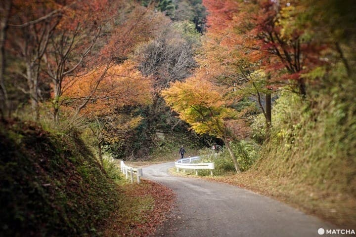 Yoro Valley's Tsutsumori Momiji Valley – A Fall Foliage Trip By Local Train