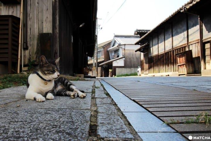 【广岛】ARASHI岚也来拍广告! 300年江户时代风貌——竹原老街保存区
