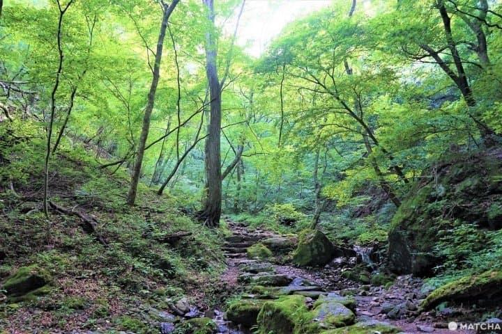 สวนหินในภูเขามิตาเกะ (Mitake) - สถานที่ฟังเสียงน้ำในลำธารไหลที่โตเกียว