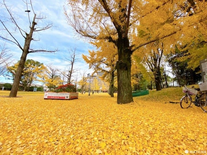 ชมวิว 4 ฤดู และลิ้มรสอาหารท้องถิ่น รวม 6 ที่เที่ยวในคุมาโมโตะ (Kumamoto)