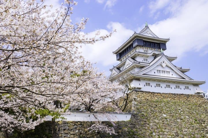 福岡賞櫻櫻花景點_北九州小倉城