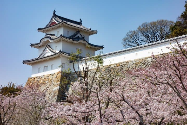 Cherry Blossoms In Hyogo 2020 14 Recommended Spots Matcha Japan Travel Web Magazine