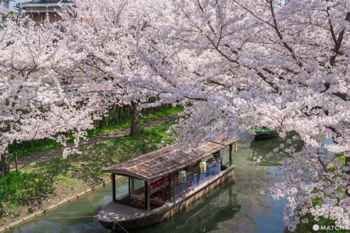 【2020】京都春浪漫樱花开满天,22个超人气赏花景点任您选!