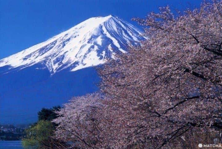 与富士山、温泉、城堡共赏!关东近郊赏花景点7选(2020年版)