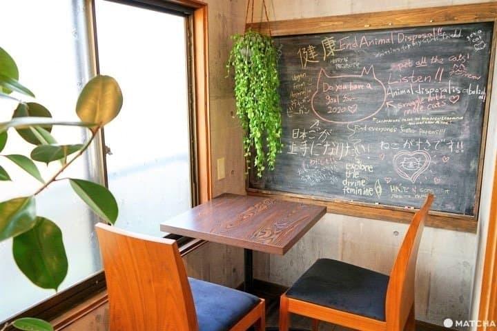 For Animal Lovers! Osaka's Vegan Rescue Cat Cafe, Neu