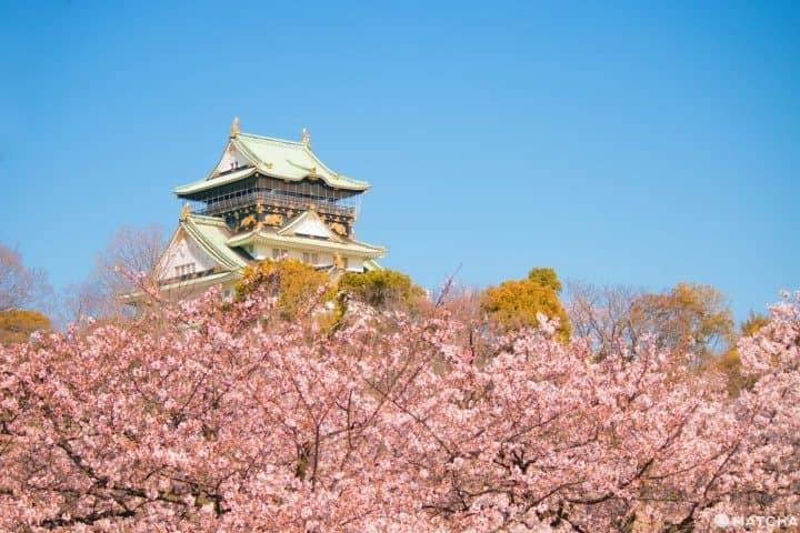 Top 10 địa điểm ngắm Sakura - hoa Anh đào nhất định phải đi ở Osaka
