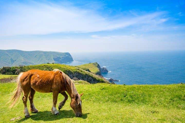nishinoshima horses