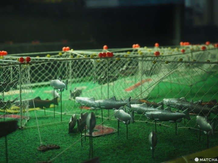 【北海道 根室】走入鮭魚的生命時光機「鮭魚科學館」