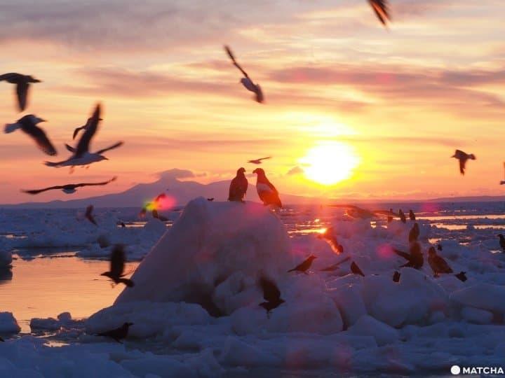 【北海道 罗臼】老鹰、流冰与初升的太阳,知床半岛的冰与火之歌!