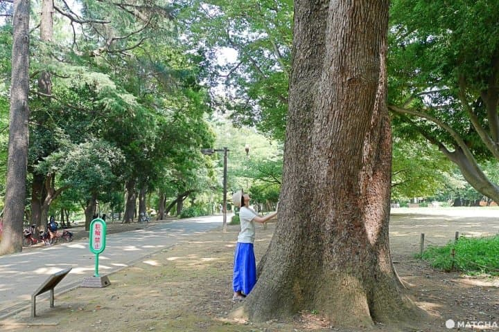 Forest Bathing And Nature Walks In Tokyo - Relax And Soothe Away Stress