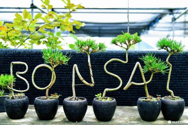 Yuk, Caritahu Cara Unik Menikmati Tanaman Bonsai dari Ahlinya!
