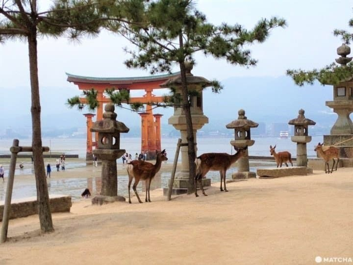 Miyajima: Tips For Enjoying Its Nature And Beauty