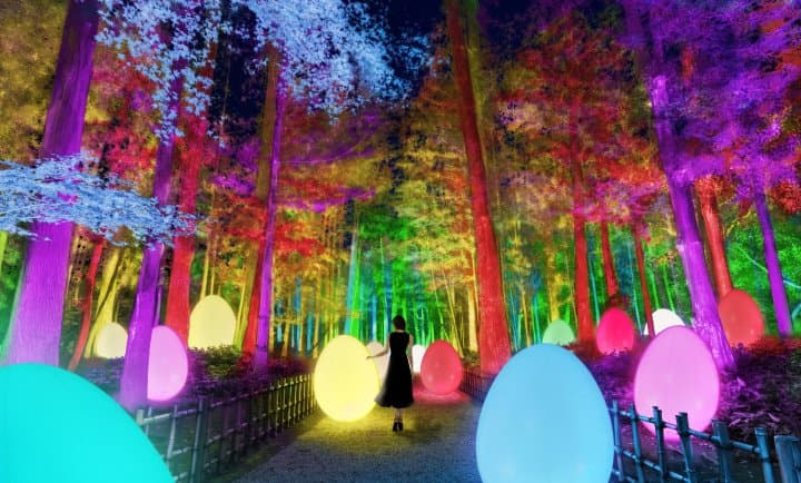 3,000 Trees Explode with Color! teamLab Transforms an Ancient Japanese Garden